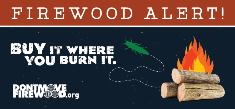Eab awareness firewood alert